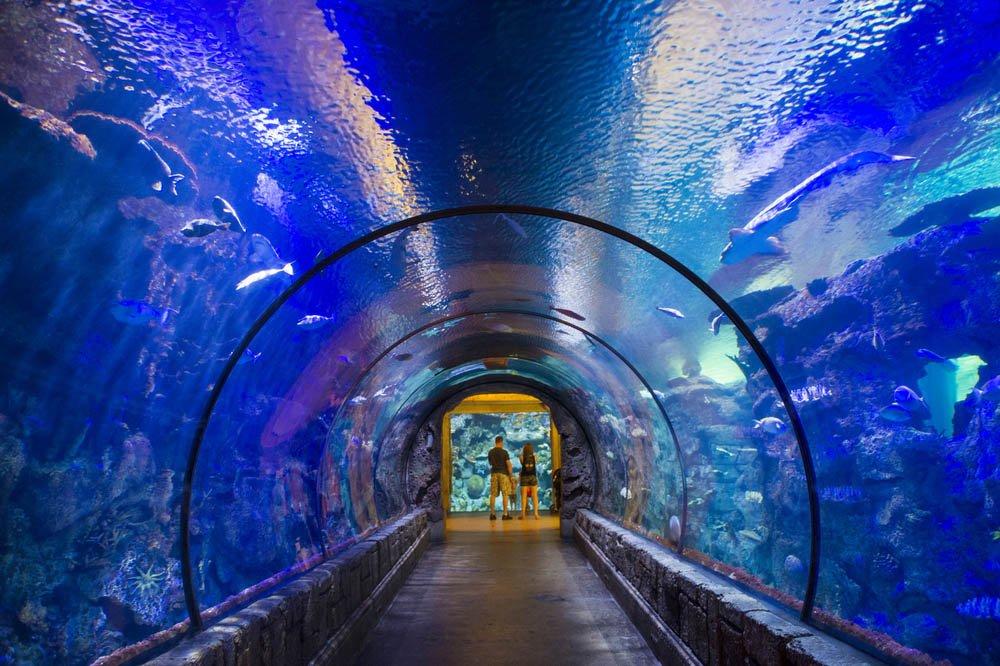 Mandalay Baye o Aquário de Shark Reef