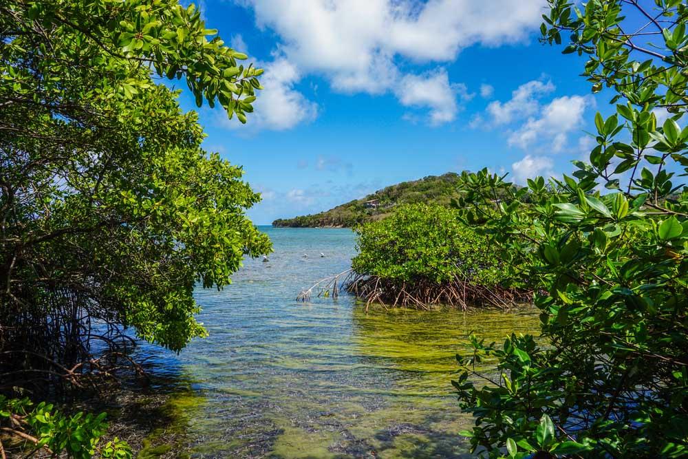 Passeio de caiaque pelos manguezais